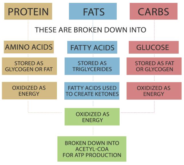 metabolicpathway